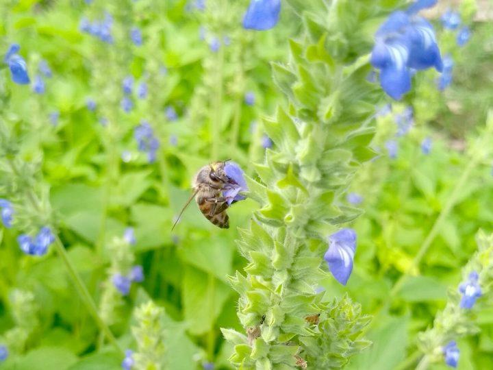 Mortandade de abelhas pauta Simpósio